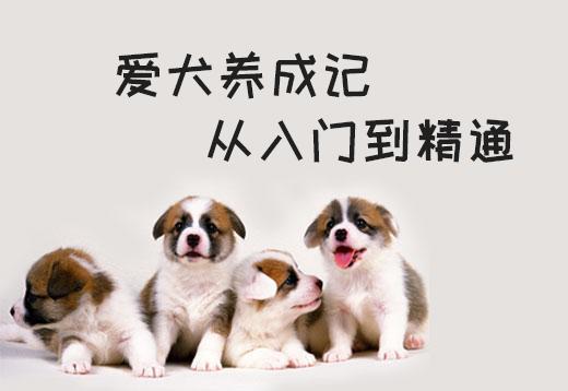 狗狗喂养与训练