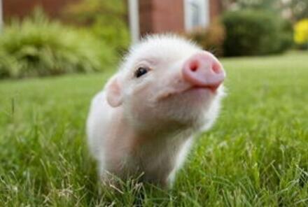 养殖-种猪饲养技术班